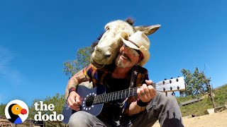 Donkey Snuggles Into Guy's Shoulder Every Time He Plays Guitar | The Dodo Soulmates