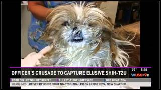 Wild Shih Tzu Caught After 2 Years On The Run