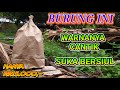 Burung Kecil Jago Siul Warna Elegan Harga Murah Unboxing  Mp3 - Mp4 Download
