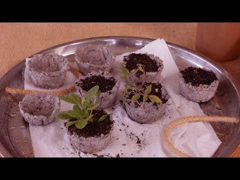 How to Make Biodegradable Seed Raising Pots