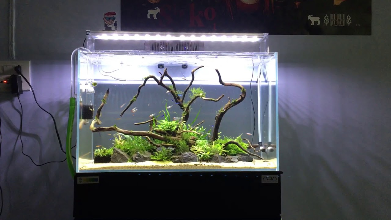 New Island aquascape - YouTube