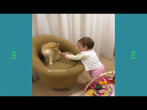 Top Cute Highlights of CATS Dogs Vine #68 – Funny Cat & Dog