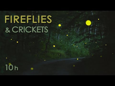 Fireflies & Crickets Calming Nature Night Sounds & Sights for Sleep & Relaxation 10 Hours