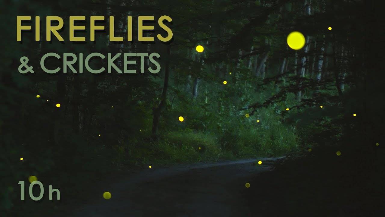Fireflies & Crickets - Calming Nature Night Sounds & Sights for Sleep & Relaxation - 10 Hours