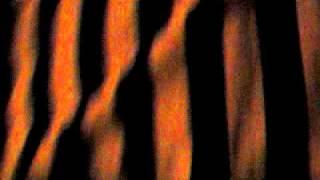 Mrtve Ribe - Zovem da ti čujem glas