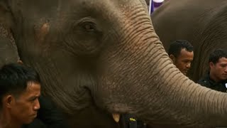 Elephants Released into the Wild | BBC Earth