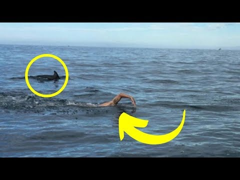 This swimmer was surrounded by a group of dolphins, when he looked down he was horrified.