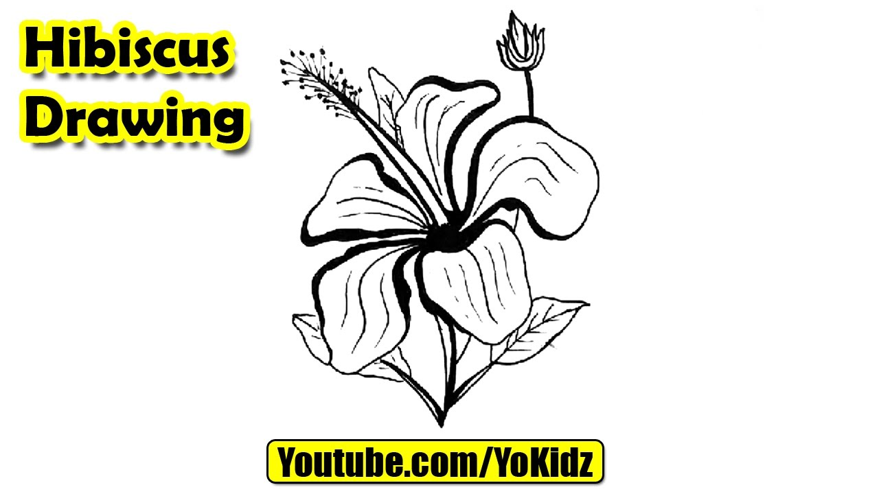 How to draw hibiscus flower youtube how to draw hibiscus flower ccuart Image collections