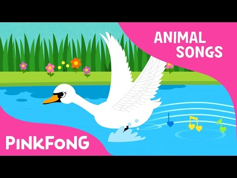 Swan  Animal Songs  Pinkfong Songs for Children