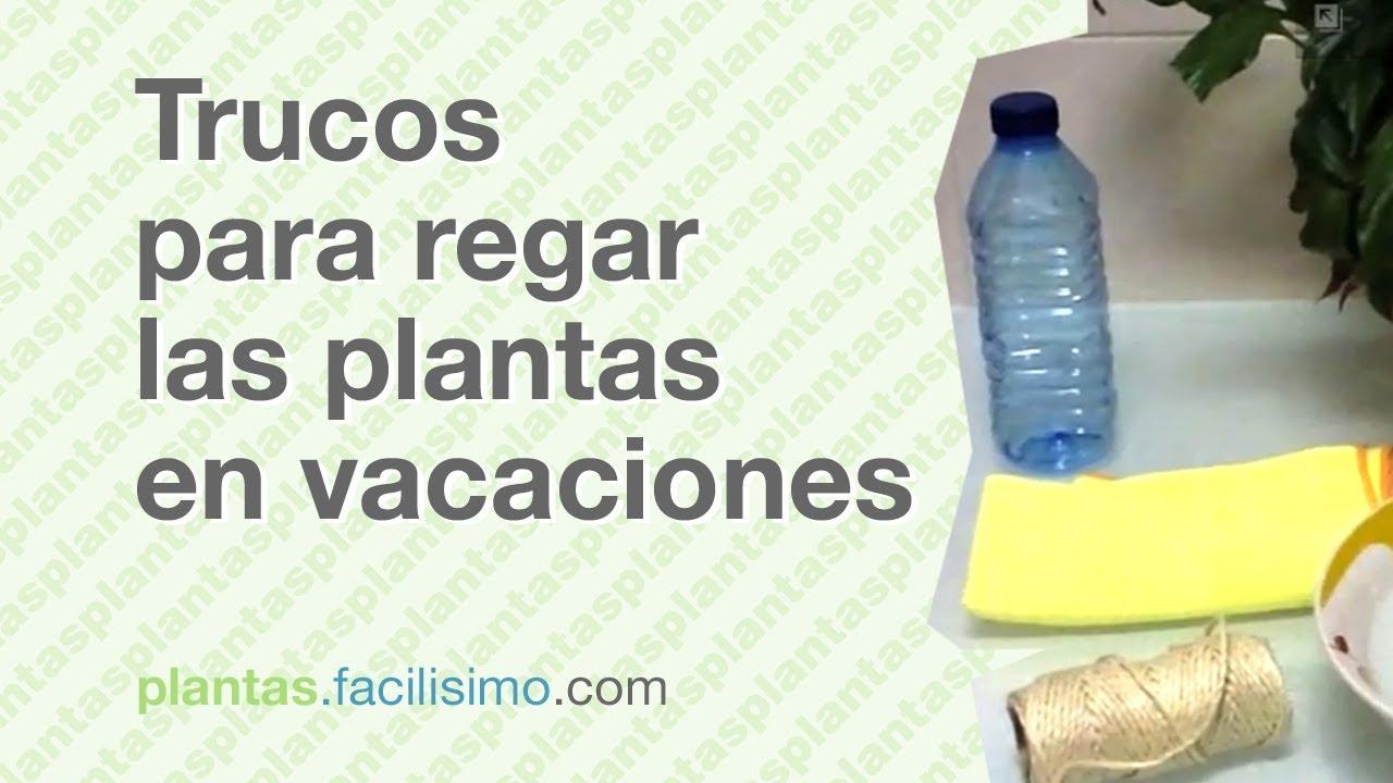 trucos para regar las plantas en vacaciones facilisimo