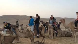 Wymiana polsko-izraelska: Jak zsiadać z wielbłąda?