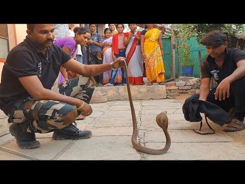 देखिये कहा छुपा था ये कोबरा साप   Rescue cobra snake from Ahmednagar, maharashtra