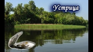 Ловим Устрицу. Русская Рыбалка 3.99.