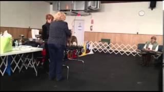 Cairn Terrier Breed Seminar