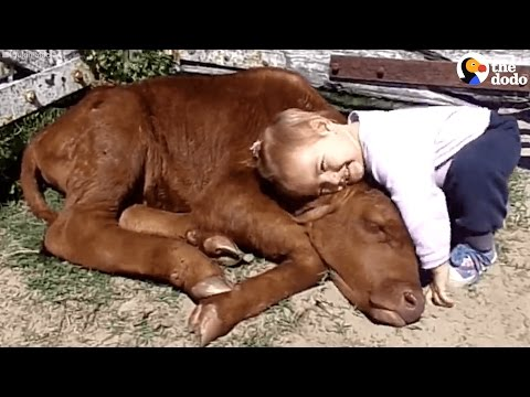 Little Girl Can't Stop Hugging This Cow
