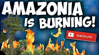 Gambar cover BRAZIL'S AMAZON RAIN FOREST IS BURNING AT RECORD RATE - AQUARIUM FISH KEEPING NEWS!