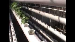 testing irigasi hidroponik