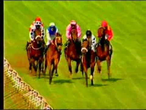 zimbabwe horse race - 03.avi