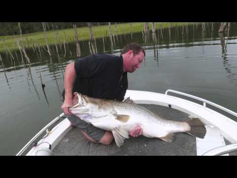 Tinaroo Barramundi 123cm & Over 60 Pound!
