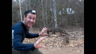 Kiwi vs Fossa