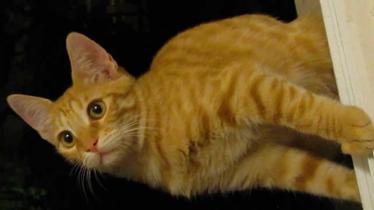 картинки рыжие коты смешные