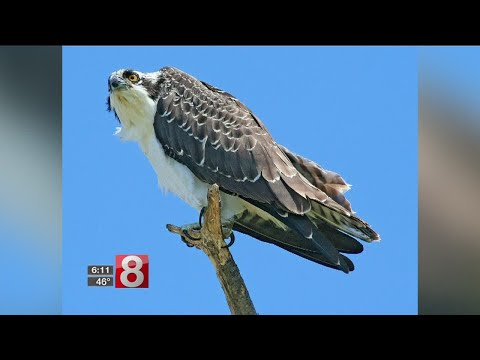 State looking for bird lovers to help with research project
