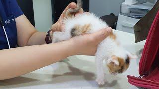 새끼고양이구충? 접종? 냥줍해온 삼색이 아기고양이의 동…