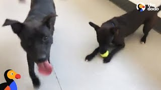 LIVE: Puppy Brothers Rescued from Puerto Rico Up For Adoption | The Dodo LIVE