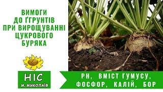 Вимоги до ґрунтів при вирощування цукрового буряка. pH, Вміст гумусу, Фосфор, Калій, Бор