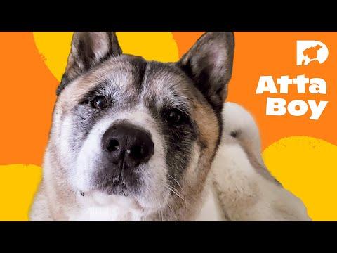 DOGTV Stimulation: Dog Playing in Corn Field