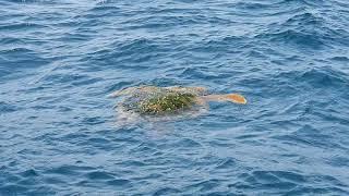 거북의  탈출