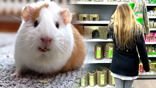 Going to the Pet Store | Guinea Pig Supplies & Black Friday