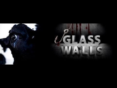 Glass walls- The lecture