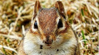 Relax Your Pet | Chipmunks For Cats | 8 Hour Entertainment Video | Leave On All Day