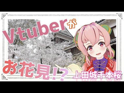 【上田城】Vtuberがバーチャルお花見!【Vtuber/木上ヒナさんぷるっ!】