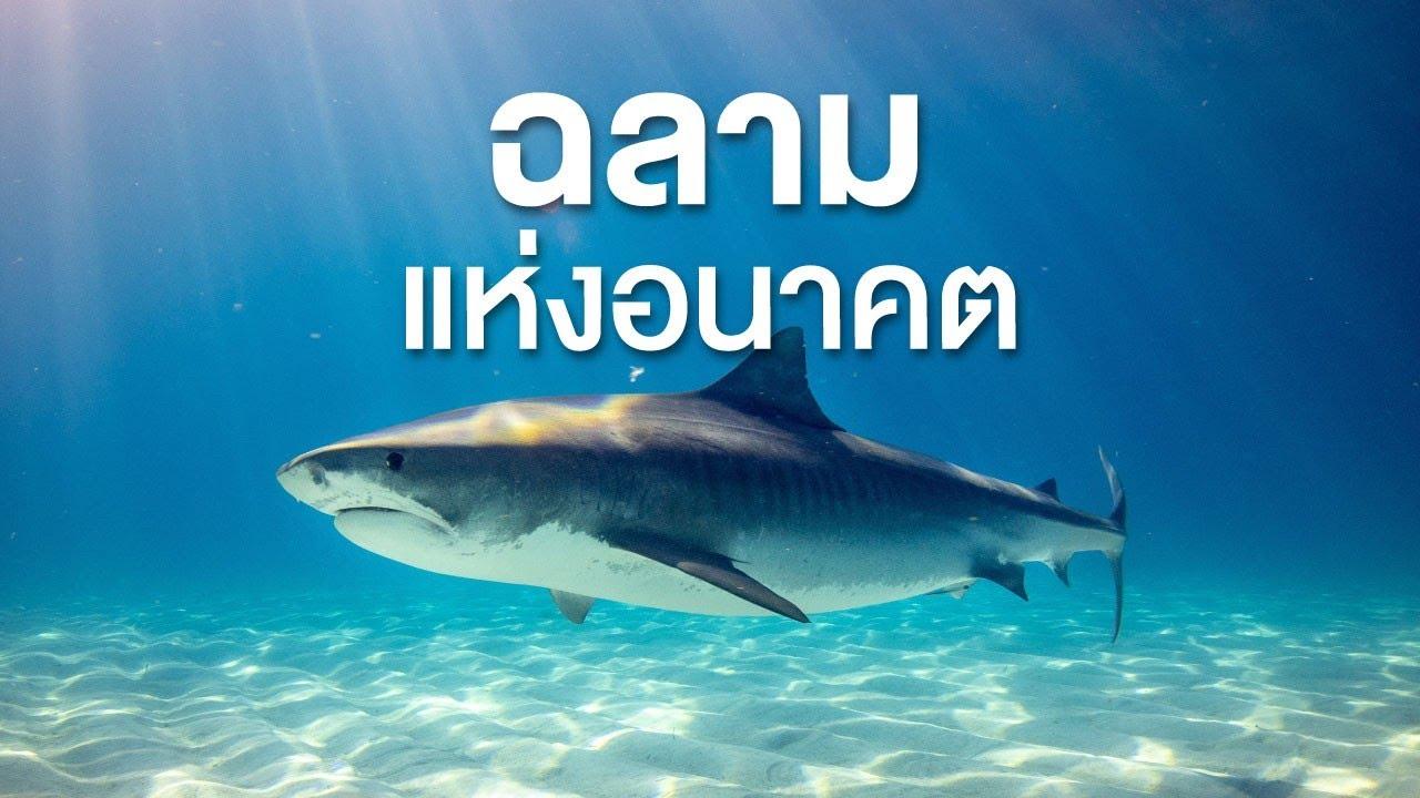 สารคดี สำรวจโลก ตอน ฉลามแห่งอนาคต