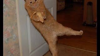 Интересные и смешные моменты с кошками!Видео подборка №11!