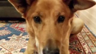 STELLA REACTS to VIRAL DOG!! It's insane!