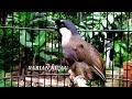 Pancing Bunyi Burung Poksay Hongkong Anda Biar Rajin Bunyi Dengan Poksay Hongkong Gacor Ini  Mp3 - Mp4 Download
