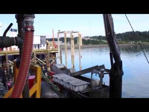 Seafood, Sea Culture, Sea Lives: Kodiak's Industrial Arts District