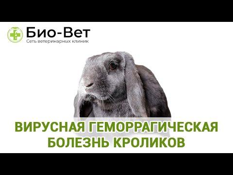 Вирусная геморрагическая болезнь кроликов (ВГБК