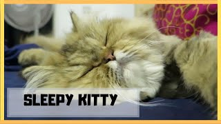 This Sleepy Cat Will Relax You Too! | Calming (Episode #1)