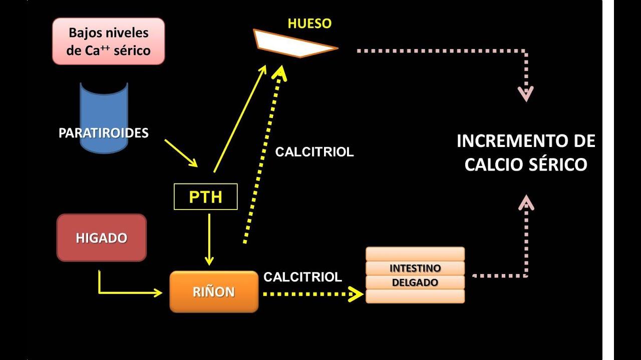 Los tiempos están cambiando Cómo Tipos de metabolismo Nuevas habilidades