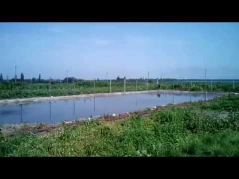 Сколько стоит пруд построить.