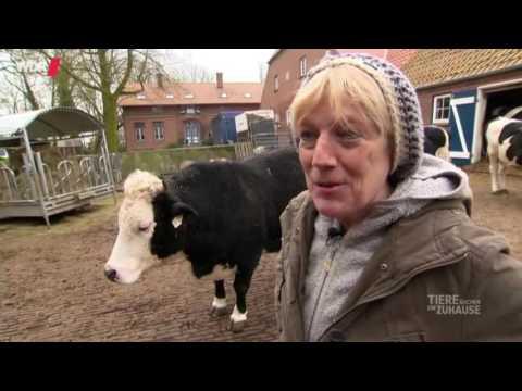 Hof Butenland: Das Kuhparadies WDR Tiere Suchen Ein Zuhause