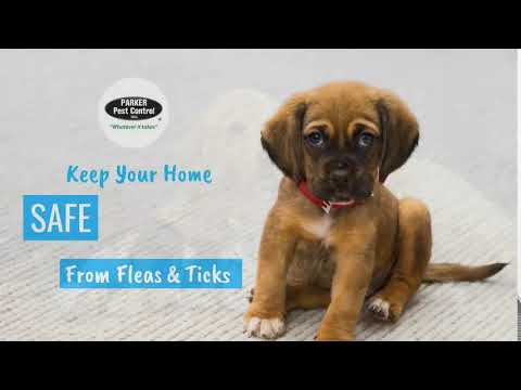 Keep Pets Free of Fleas & Ticks