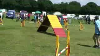 Wirral 2008 Large Agility Grade1