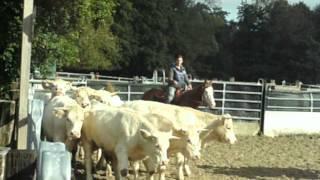 Premier stage bétail avec jac