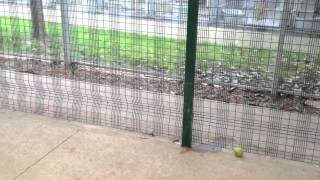 Rspca Leicester Training 12th March 2012