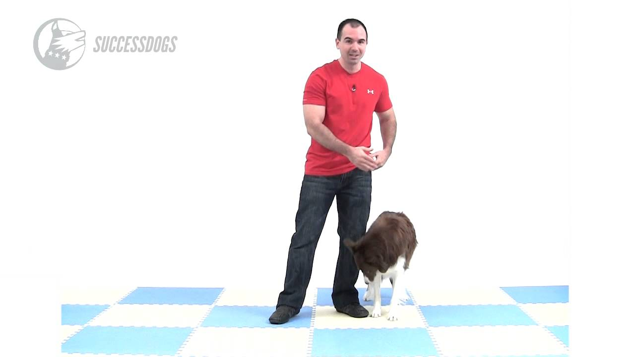 How To Teach Your Dog To Go Through Your Legs